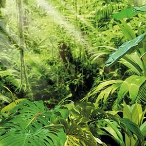 foto - Amazonas - página - colores - del -mundo - Bruguer